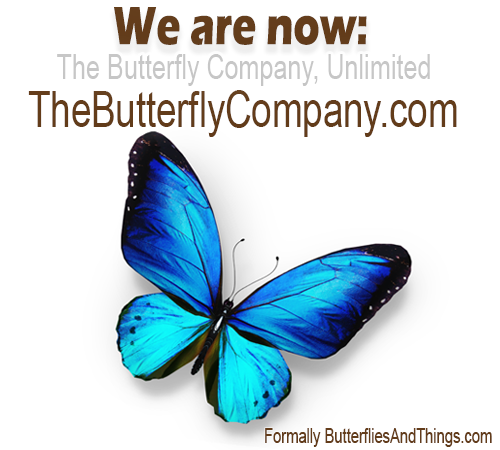 Buy Butterflies, Insects, Moths, Beetles - Butterfly Gifts & Supplies