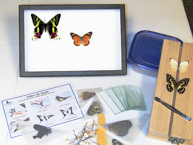 Butterflies, moths, beetles and insect specimens for sale ...