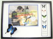 Indonesia Butterfly Collection ACTIVITY KIT