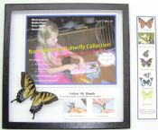 North America Butterfly Collection ACTIVITY KIT