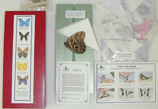 South America Butterfly Collection ACTIVITY KIT