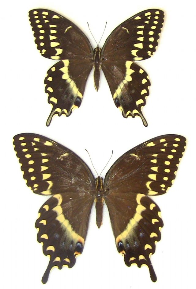 Male (Top)  Female (Bottom)