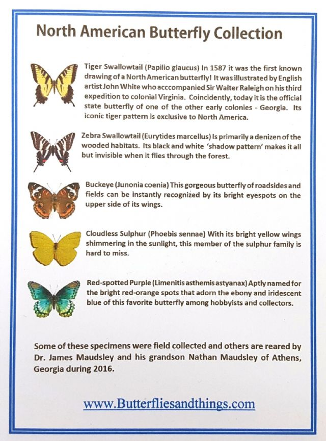 5 North America Butterflies with names - Ready to Re-hydrate