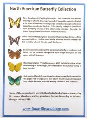 5 North America Butterflies with names!