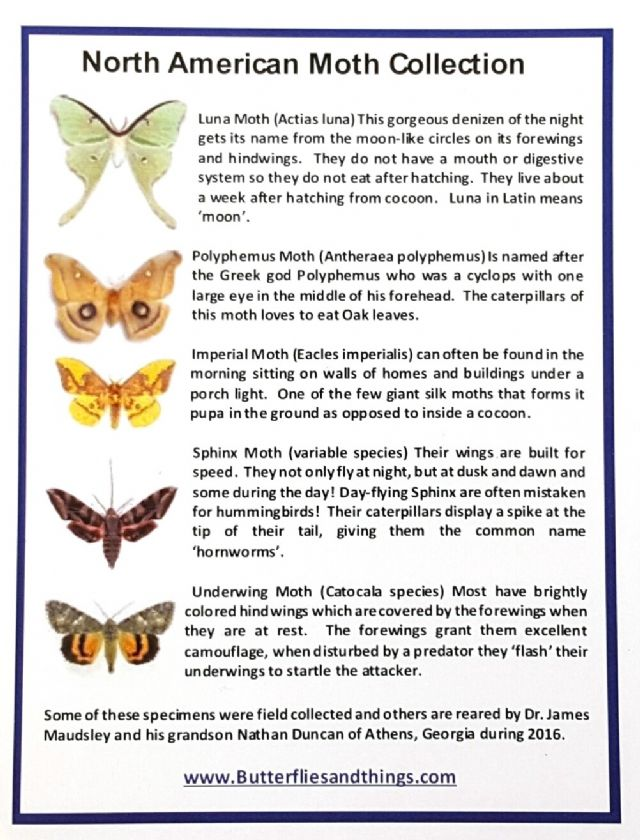 5 North America Moths with names!