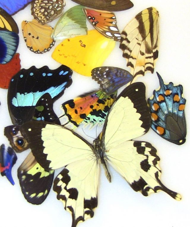 40 Assorted Tropical Wings for Wing Art Projects