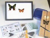 Butterfly Start Up Kit with Display Case
