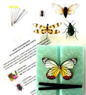 Entomology & Me Activity  Kit