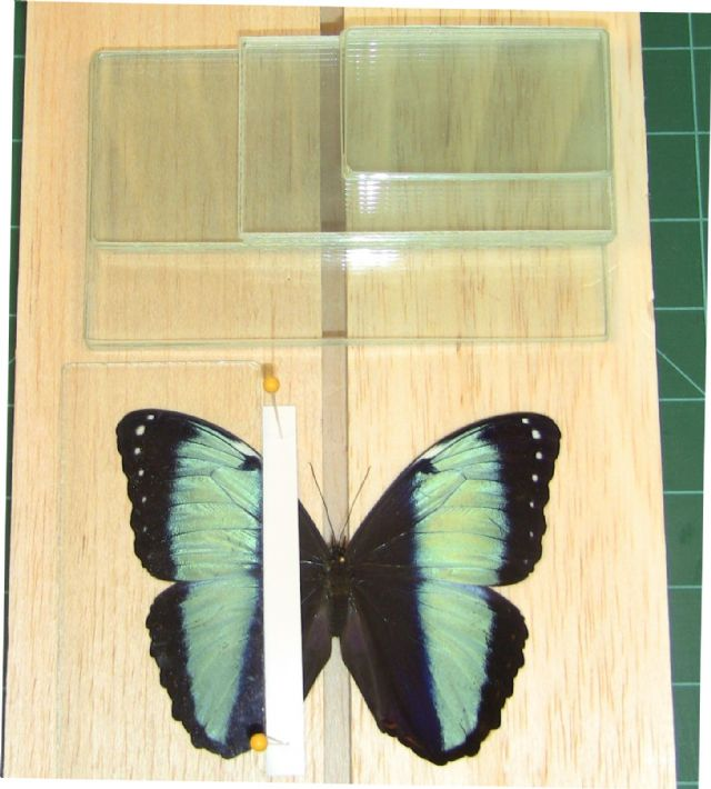 Glass Butterfly Wing Slides (6pc set)
