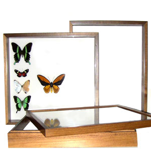 Cornell Cases and Wood Frames