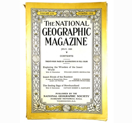 National Geographic Magazine 1929; Exploring the Wonders of the Insect World