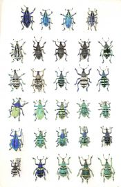 World Weevil Collection