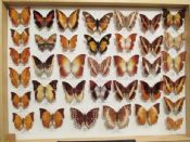 Charaxes Collection  #2 (Spread as shown)